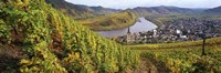"""High angle view of vineyards with town along the river, Bremm, Mosel River, Calmont, Rhineland-Palatinate, Germany by Panoramic Images - 27"""" x 9"""""""