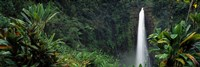 "Akaka Falls State Park, Hawaii, USA by Panoramic Images - 36"" x 12"""