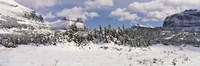 """Mountains with trees in winter, Logan Pass, US Glacier National Park, Montana, USA by Panoramic Images - 36"""" x 12"""""""