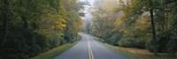 Trees along a road, Blue Ridge Parkway, North Carolina, USA Fine Art Print