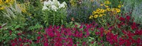 "Close-up of flowers in a garden by Panoramic Images - 36"" x 12"""