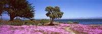 "Flowers on the beach, Pacific Grove, Monterey County, California, USA by Panoramic Images - 36"" x 12"""