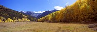 Aspens on a Hilll, Aspen, Colorado by Panoramic Images - various sizes - $32.49
