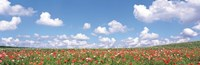 """Meadow flowers with cloudy sky in background by Panoramic Images - 36"""" x 12"""""""