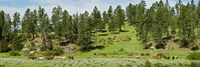 Horses on roundup, Billings, Montana, USA by Panoramic Images - various sizes