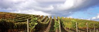 """Cloudy skies over a vineyard, Napa Valley, California, USA by Panoramic Images - 36"""" x 12"""""""