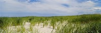Sand dunes at Crane Beach, Ipswich, Essex County, Massachusetts, USA Fine Art Print