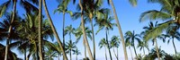 Low angle view of palm trees, Oahu, Hawaii, USA Fine Art Print