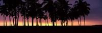 "Silhouette of palm trees on the beach, Puuhonua o Honaunau National Historical Park, Big Island, Hawaii, USA by Panoramic Images - 36"" x 12"""