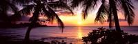 """Palm trees on the coast, Kohala Coast, Big Island, Hawaii, USA by Panoramic Images - 36"""" x 12"""""""