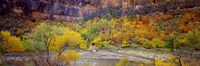 Big Bend in fall, Zion National Park, Utah, USA Fine Art Print