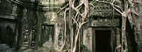 """Ruins of Ta Prohm Temple, Angkor, Cambodia by Panoramic Images - 36"""" x 12"""""""