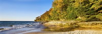 Trees on the beach, Miner's Beach, Pictured Rocks National Lakeshore, Upper Peninsula, Michigan, USA by Panoramic Images - various sizes