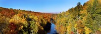 Trees in Autumn at Dead River, Michigan by Panoramic Images - various sizes