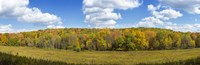 "Autumn Trees in New York by Panoramic Images - 36"" x 12"", FulcrumGallery.com brand"
