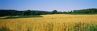 Field Crop Maryland USA
