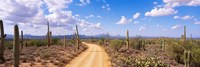 "Road, Saguaro National Park, Arizona, USA by Panoramic Images - 27"" x 9"""