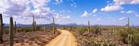 Road Saguaro National Park Arizona USA