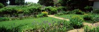 USA, Virginia, Williamsburg, colonial garden Fine Art Print