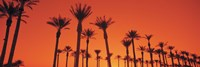 "Silhouette of date palm trees in a row, Phoenix, Arizona, USA by Panoramic Images - 27"" x 9"""