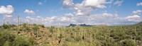 Saguaro National Park Tucson AZ USA