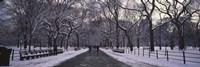 "Bare trees in a park, Central Park, New York City, New York State, USA by Panoramic Images - 27"" x 9"""