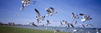 """Flock of seagulls flying on the beach, New York State, USA by Panoramic Images - 27"""" x 9"""", FulcrumGallery.com brand"""