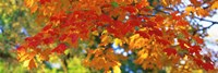 """Fall Foliage, Guilford, Baltimore City, Maryland, USA by Panoramic Images - 27"""" x 9"""""""