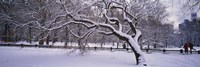 "Trees covered with snow in a park, Central Park, New York City, New York state, USA by Panoramic Images - 27"" x 9"""