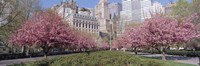 """Cherry Trees, Battery Park, NYC, New York City, New York State, USA by Panoramic Images - 27"""" x 9"""""""