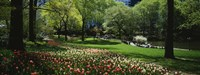 """Flowers in a park, Central Park, Manhattan, New York City, New York State, USA by Panoramic Images - 27"""" x 10"""", FulcrumGallery.com brand"""