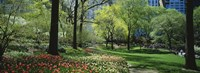 """Red and white tulips around trees, Central Park, Manhattan, New York City, New York State, USA by Panoramic Images - 27"""" x 9"""""""