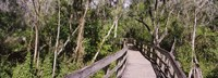 """Boardwalk passing through a forest, Lettuce Lake Park, Tampa, Hillsborough County, Florida, USA by Panoramic Images - 27"""" x 9"""", FulcrumGallery.com brand"""