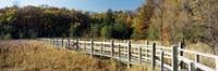 """Boardwalk passing through a forest, University of Wisconsin Arboretum, Madison, Dane County, Wisconsin, USA by Panoramic Images - 27"""" x 9"""", FulcrumGallery.com brand"""