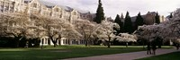 "University of Washington, Seattle, King County, Washington State by Panoramic Images - 27"" x 9"""