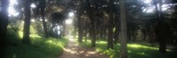 """Footpath passing through a park, The Presidio, San Francisco, California, USA by Panoramic Images - 27"""" x 9"""" - $28.99"""