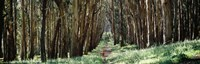 """Woman walking on a path in a park, The Presidio, San Francisco, California, USA by Panoramic Images - 27"""" x 9"""""""