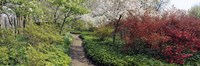"""Trees in a garden, Garden of Eden, Ladew Topiary Gardens, Monkton, Baltimore County, Maryland, USA by Panoramic Images - 27"""" x 9"""""""