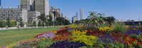 """Flowers in a garden, Welcome Garden, Grant Park, Michigan Avenue, Roosevelt Road, Chicago, Cook County, Illinois, USA by Panoramic Images - 27"""" x 9"""", FulcrumGallery.com brand"""