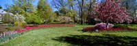 """Tulips and cherry trees in a garden, Sherwood Gardens, Baltimore, Maryland, USA by Panoramic Images - 27"""" x 9"""""""
