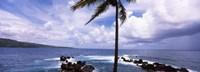 """Palm tree on the coast, Honolulu Nui Bay, Nahiku, Maui, Hawaii, USA by Panoramic Images - 27"""" x 9"""""""