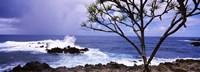 """Tree on the coast, Honolulu Nui Bay, Nahiku, Maui, Hawaii, USA by Panoramic Images - 27"""" x 9"""""""