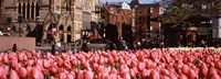 """Tulips in a garden with Old South Church in the background, Copley Square, Boston, Suffolk County, Massachusetts, USA by Panoramic Images - 27"""" x 9"""""""