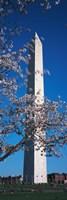 Cherry Blossom in front of an obelisk, Washington Monument, Washington DC, USA Fine Art Print