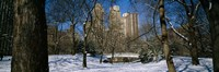 """Bare trees with buildings in the background, Central Park, Manhattan, New York City, New York State, USA by Panoramic Images - 27"""" x 9"""" - $28.99"""
