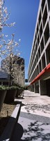 """Blooming tree in the business district, Downtown San Jose, San Jose, Santa Clara County, California, USA by Panoramic Images - 9"""" x 27"""""""