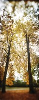"""Autumn trees in a park, Volunteer Park, Capitol Hill, Seattle, King County, Washington State, USA by Panoramic Images - 9"""" x 27"""""""