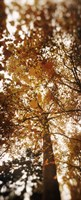 """Autumn Trees on Capitol Hill, Seattle, Washington by Panoramic Images - 9"""" x 27"""", FulcrumGallery.com brand"""