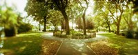 """Trees in a park, McCarren Park, Greenpoint, Brooklyn, New York City, New York State, USA by Panoramic Images - 27"""" x 9"""""""