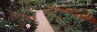 "International Rose Test Garden, Washington Park, Portland, Oregon by Panoramic Images - 27"" x 9"", FulcrumGallery.com brand"